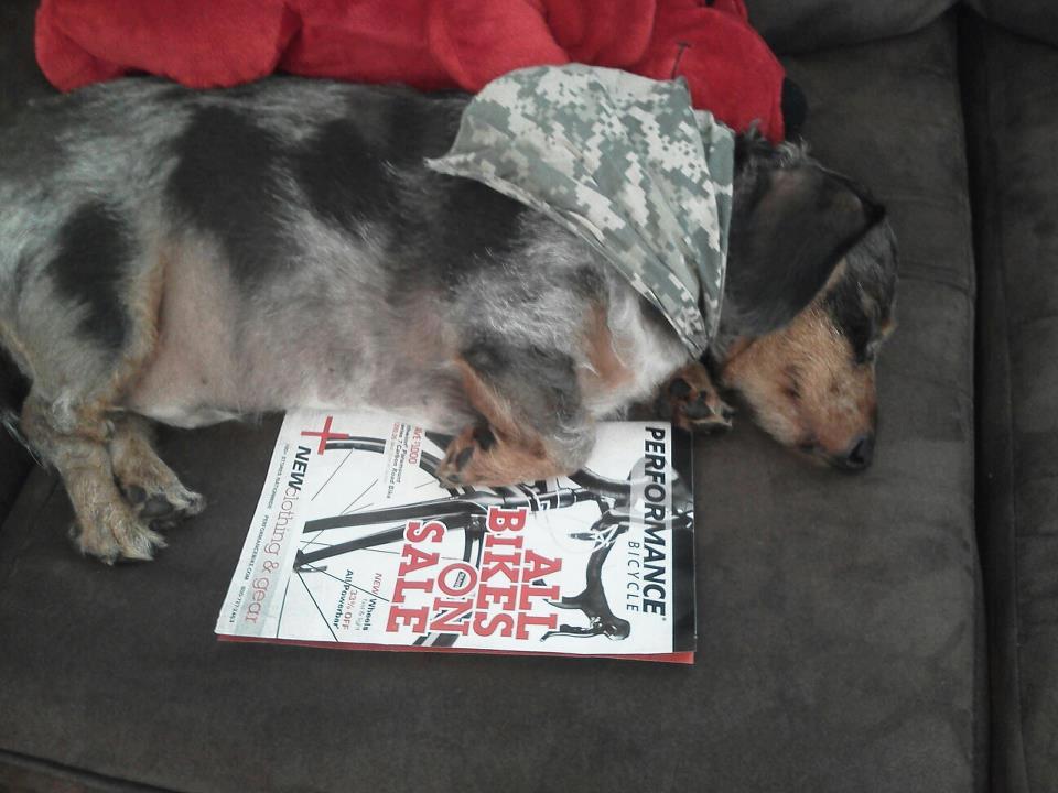 catalog_dog